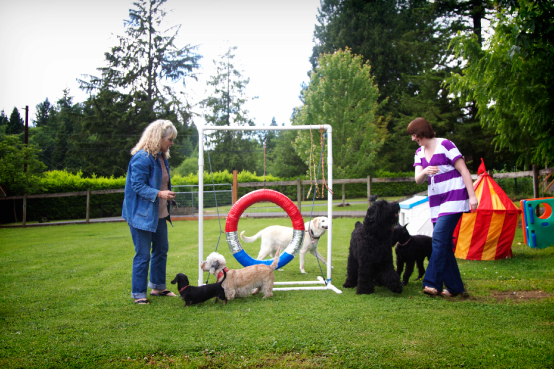 Dog boarding playgroup