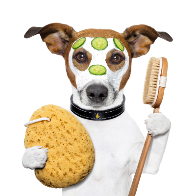 Dog Grooming A Must For Canine Health