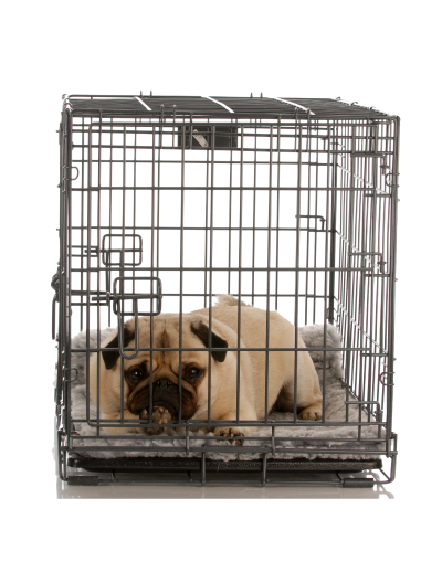 To Crate Train or Not? Discover the Answer to This Question!