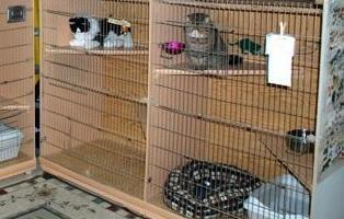 Inside view of our cat boarding facility