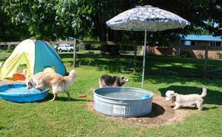 An outside view of our dog boarding facilities