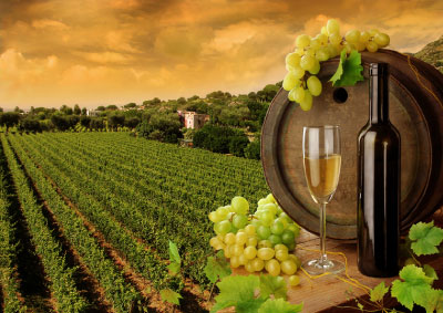 Visit The Wine Trails of WNY In Style