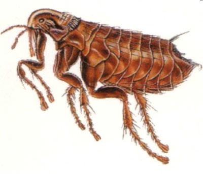 Flea and Tick Advice
